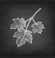 chalk sketch maple branch vector image vector image