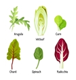 Collection of different plants arugula witloof vector image vector image