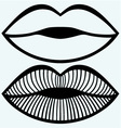 Passionate female lips vector image vector image