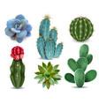 cactus succulent realistic set vector image vector image