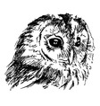 Hand sketch owl head vector image