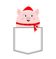 pig face head in pocket piggy piglet vector image