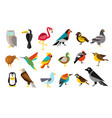 various bird set colorful vector image