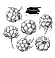 cloudberry drawing organic berry food vector image vector image