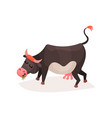 funny black and white milk cow eating grass vector image
