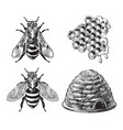 set bee wasp honeycombs hive vintage drawing vector image vector image