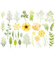 set botanical elements vector image vector image