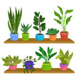 two wooden shelves with various houseplants vector image vector image