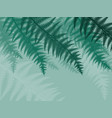 background with fern leaves silhouettes vector image