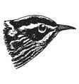 black and white warbler vintage vector image vector image