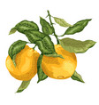 bright branch with orange fruits made in graphic vector image