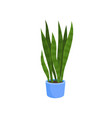 flat icon of sansevieria trifasciata or vector image vector image