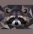 polygonal raccoon isolated on white low vector image vector image