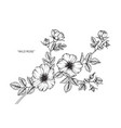 wild rose flower drawing vector image vector image