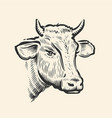 cow head hand drawn sketch in a graphic style vector image
