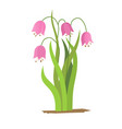 drawing bell flowers isolated floral vector image