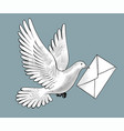 flying white post pigeon with a letter vector image