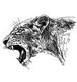 Hand sketch roaring lioness head vector image vector image