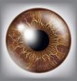human eye iris 3d realistic eyeball vector image vector image