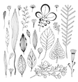 Leaves hand drawn collection Cute