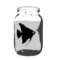 black silhouette of aquarium fish in a jar with vector image vector image
