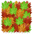 maple leaves2 vector image vector image