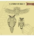 Family owl vector image