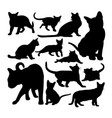 cute burmese cat animal silhouettes vector image vector image