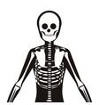 half body silhouette system bone with vertebrae vector image vector image
