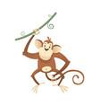 jungle wild monkey colorful safari circus vector image vector image
