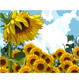 sunflower on the background of sunflowers vector image