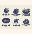set of vintage wild boar emblems vector image