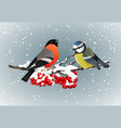 bullfinch and titmouse sitting on snow-covered vector image