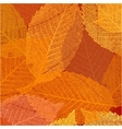Dry autumn leaves template EPS 8 vector image vector image