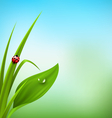 green grass plantain and ladybug on blue sky vector image