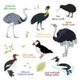set different birds cassowary southern vector image