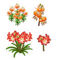 beautiful red and orange lilies flowers vector image