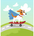 cute jack russell terrier in blue cape riding with vector image vector image
