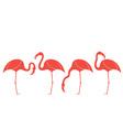 Flamingo Exotic Birds vector image vector image