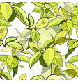 seamless pattern branches with green leaves vector image vector image