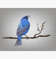 a croaking bird on a cherry blossom branch vector image
