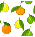 citrus mix - lemon lime fruit orange mandarin vector image