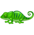 Cartoon cute Chameleon vector image vector image