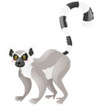 cute lemur on white background vector image