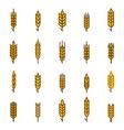 ears wheat bread symbols vector image