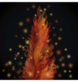 Different fire flames on a black background with