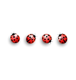 Four lady bugs with shadows on white vector image vector image