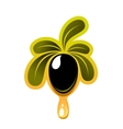 Fresh olive dripping olive oil vector image vector image