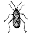 Squash bug vector image