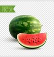 watermelon realistic design concept vector image vector image